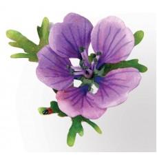 Snijmal Susan's garden Hardy geranium
